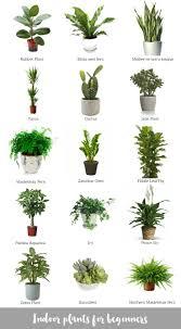 best 25 snake plant ideas on pinterest palm house plants where