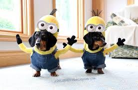 Winnie Pooh Dog Halloween Costume Wiener Dog Minions