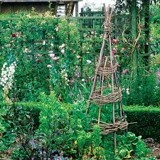build a tipi for climbing plants sunset