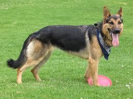 لمنع الغش في تجارت الكلاب كل نوع وصفاته Images?q=tbn:ANd9GcRfZbVzt4zlSDkSocfMbhXp78AUD3vvAqsD2M16y_bBk9w-QQSfOg