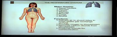 Anatomy And Physiology Chapter 1 Review Answers Anatomy And Physiology Help Chapter 1 Segment 2 Overview Of Organ