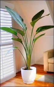 best indoor palm trees indoor plants suitable for beginners