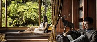Accommodation   New Zealand NewZealand com Treetops is set in private wilderness that will put you in touch with the real New
