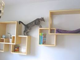 608 best cat climbs via stairs shelves cubes circles images on
