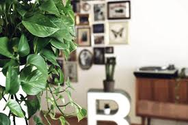 all about houseplants 3 decorating with plants ikea home