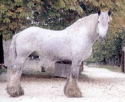 Horse Breeds - سلالات الخيل