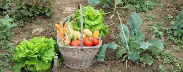 innovative vegetable garden food how to start a home vegetable