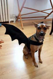 Bat Costumes Halloween 13 Diy Halloween Costumes Dogs U2013 Pug