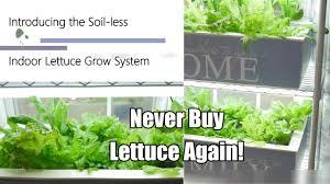 never buy lettuce again the indoor soil less lettuce grow system