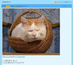 Shironeko   Basket Cat   Know Your Meme Know Your Meme