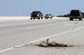 roadkill wikipedia