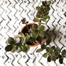 keeping your succulents alive during the fall winter months