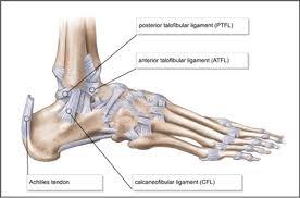 Anterior Talofibular Ligament Repair Ankle Ligaments Foot U0026 Ankle Orthobullets Com