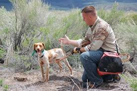 training a bluetick coonhound to hunt the hunting breed of dogs the hunters of canine world