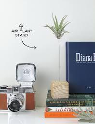 Best Office Desk Plants Cool Desk Plants Hostgarcia