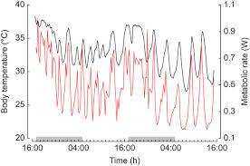 specialist u2013generalist model of body temperature regulation can be