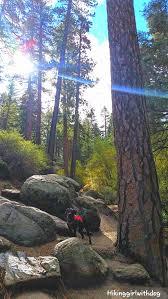 castle rock trail u2013 hiking with dog