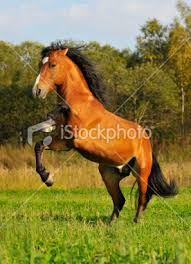 Out in the WILD (horse Rp) Images?q=tbn:ANd9GcRocUBCXNWok69Xv4Ix7L6DVkeCbtBapgzzrGORNwjNQ26_yVpW