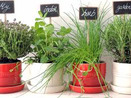 tips on growing an indoor herb garden and preserving them leeks