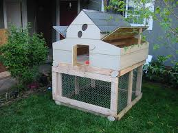 backyard chickens for sale sustainable chicken