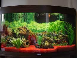 Decoration Themes How To Build Aquarium Decoration Themes Cool Modern Aquarium