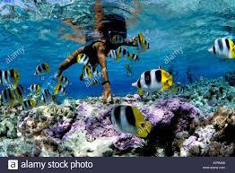 french polynesia society islands bora bora island butterfly