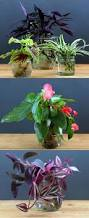 grow beautiful indoor plants in glass bottles page 2 of 2