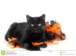 cat halloween black cat with halloween decorations stock photo image 16548610