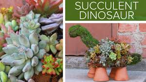 succulent dinosaur youtube