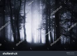 dark forest landscape background woodland night stock photo