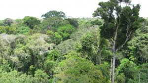 NSF Doctoral Dissertation Improvement Grant  Tree Canopy  The Fate of Amazonian Ecosystems and Eco hydrological Consequences Under Projected Climate and