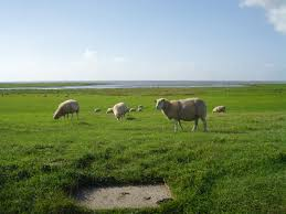 Wadden Sea National Park, Denmark