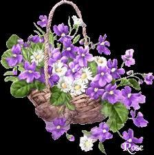 corbeille de violette