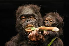 What Did Early <b>Hominins</b> Eat? - Science News - redOrbit