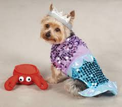 beachy halloween costumes for your pooch inspire reef