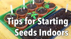 top tips for starting seeds indoors youtube