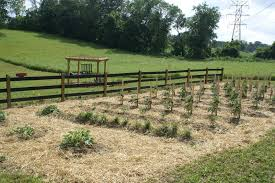 How To Keep Deer Out Of Vegetable Garden by 6 Tips To Eliminate Weeds In Your Garden This Year