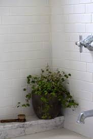 223 best indoor plants for apartments images on pinterest plants