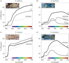 Belly Mapping Shaping Communicative Colour Signals Over Evolutionary Time Open
