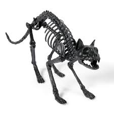 Life Size Skeleton Halloween by Lifesize Black Skeleton Cat So That U0027s Cool