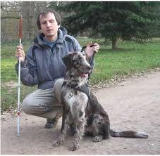 australian shepherd queensland heeler australian shepherd natural history