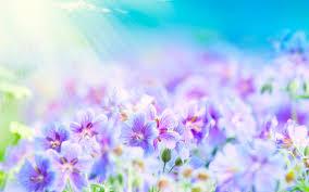 வால்பேப்பர்கள் ( flowers wallpapers ) 01 - Page 2 Images?q=tbn:ANd9GcRwHHQB50RmCvuJg0FsO_E95GUxqkBilJXfcnOY-BJoctrLbA8Y