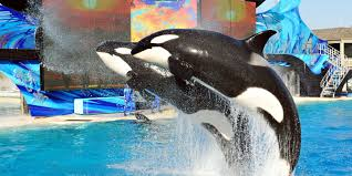 seaworld black friday deals park leaders out in big shakeup at seaworld