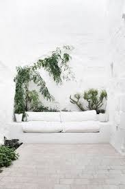 1089 best climbing indoor plants images on pinterest plants