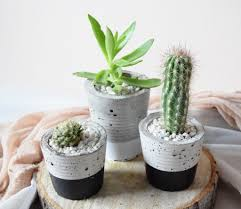potted cacti and succulents in handmade concrete pot u2013 wild north