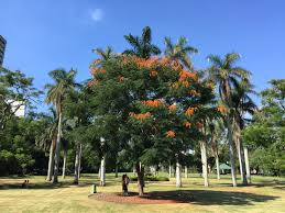 Brisbane City Botanic Gardens by Brisbane Visiting My Boss U2013 February 2015 Finger Lakes To