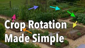 companion vegetable garden layout crop rotation made simple rotate your vegetable beds for