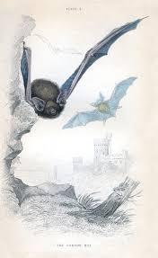 instant art printable flying bats halloween the graphics fairy