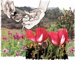 Opium Poppy Cultivation and Heroin Processing in Southeast Asia March 2001