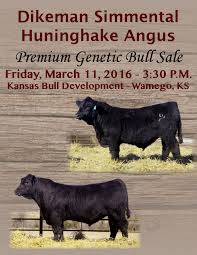 Chair Rock Angus Dikeman Simmental And Huninghake Angus 2016 Premium Genetic Bull